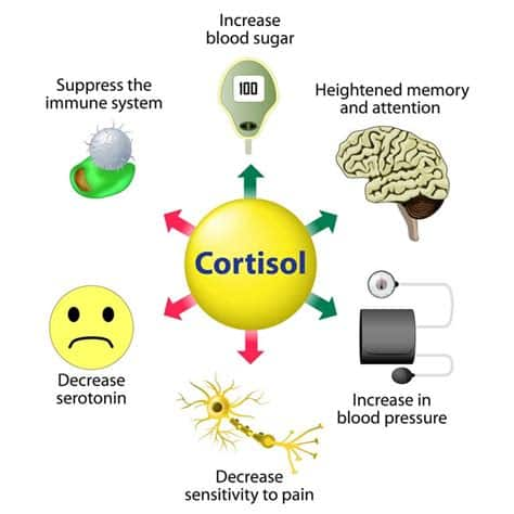 Effects of cortisol